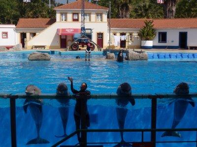 dolphinsliss.jpg