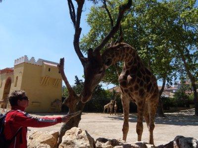 giraffe_photo.jpg