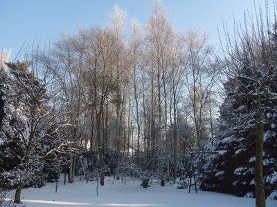 snow_view_..kyard09.jpg