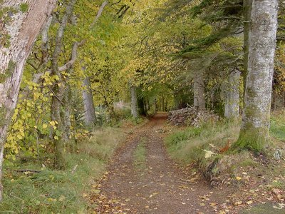 Leafy Road South Skye