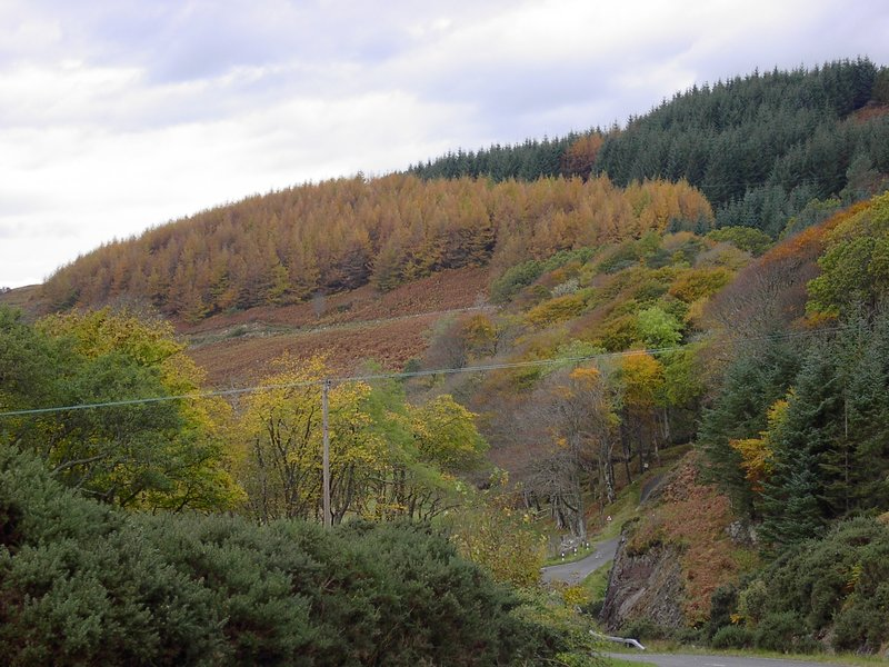 Autumn Colours at Tormore in South Skye