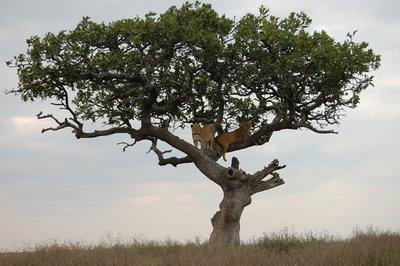 Africa_Sma..ee_full.jpg