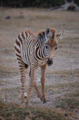 Africa_Sma..giraffe.jpg