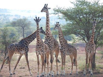 Africa_Sma..or_herd.jpg