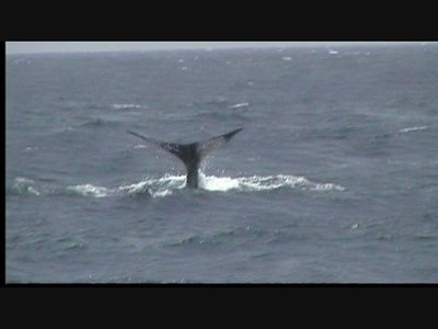 Whale Watching Dominica 1 of 4