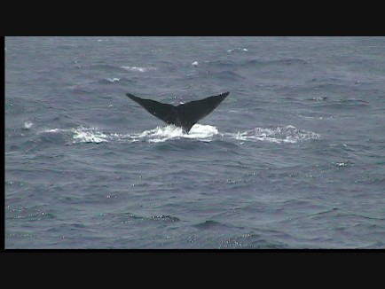 Whale Watching Dominica 2 of 4