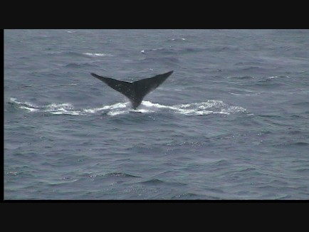 Whale Watching Dominica 4 of 4