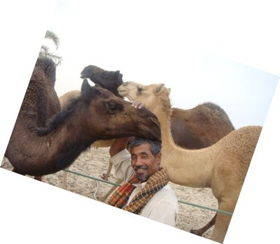 love by the camels