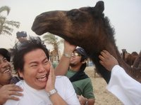 scared to camel