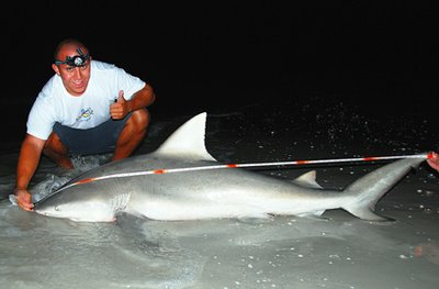 Bull Shark caught on Sanibel Island April 2008