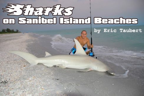 Sharks on Sanibel Beaches Worry Tourists
