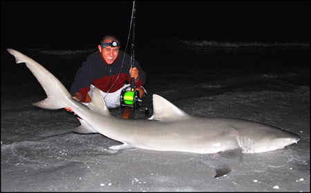 Lemon Shark caught on Sanibel Island in April 2008