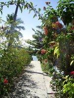 Flowers_Path.jpg