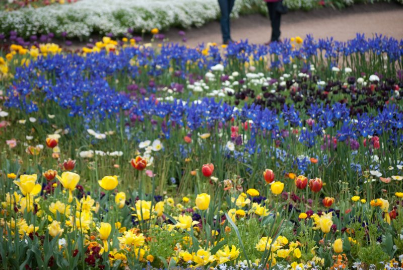 large_Floriade__26_of_100_.jpg
