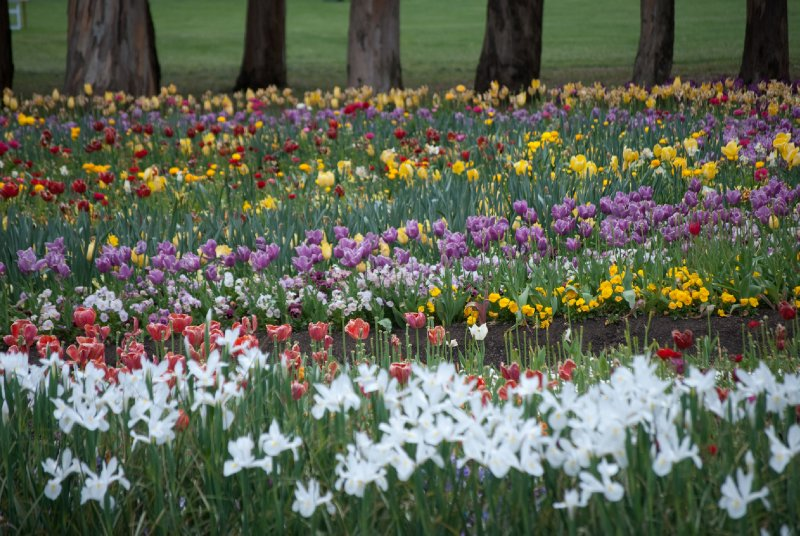 large_Floriade__28_of_100_.jpg