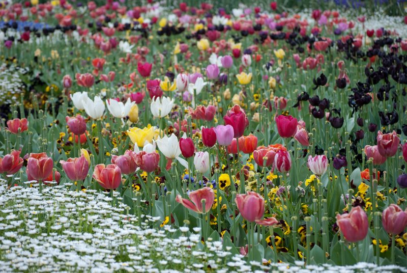 large_Floriade__33_of_100_.jpg