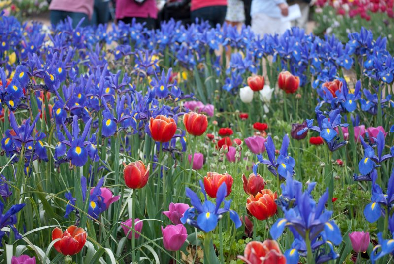 large_Floriade__50_of_100_.jpg