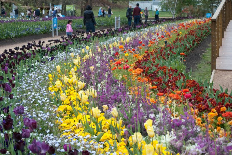 large_Floriade__70_of_100_.jpg