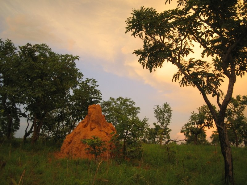 Termite Mound - Benoue National Park