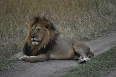 e alla fine il leone...