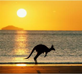 Kangaroo!