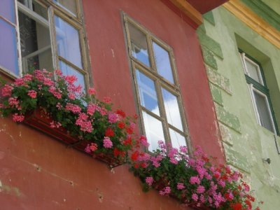 Sighi: flower boxes