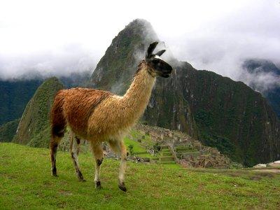 Machu_Picchu_157.jpg