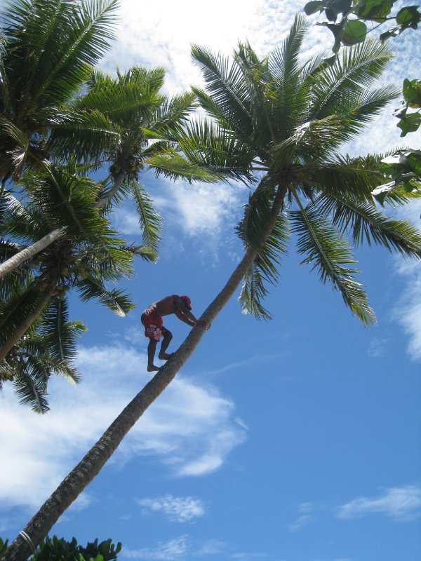 Getting Coconuts