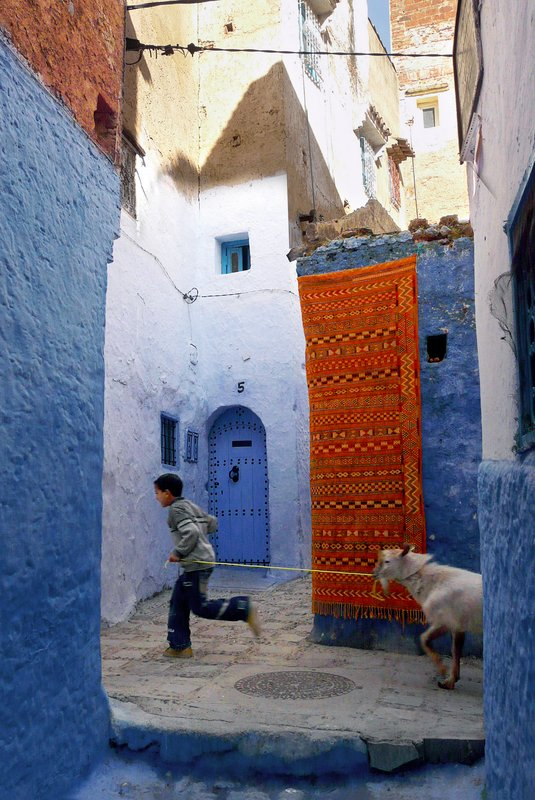 Boy and goat, Chefchaouen, Morocco