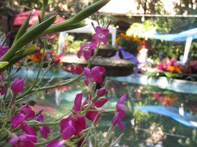 Borda Garden