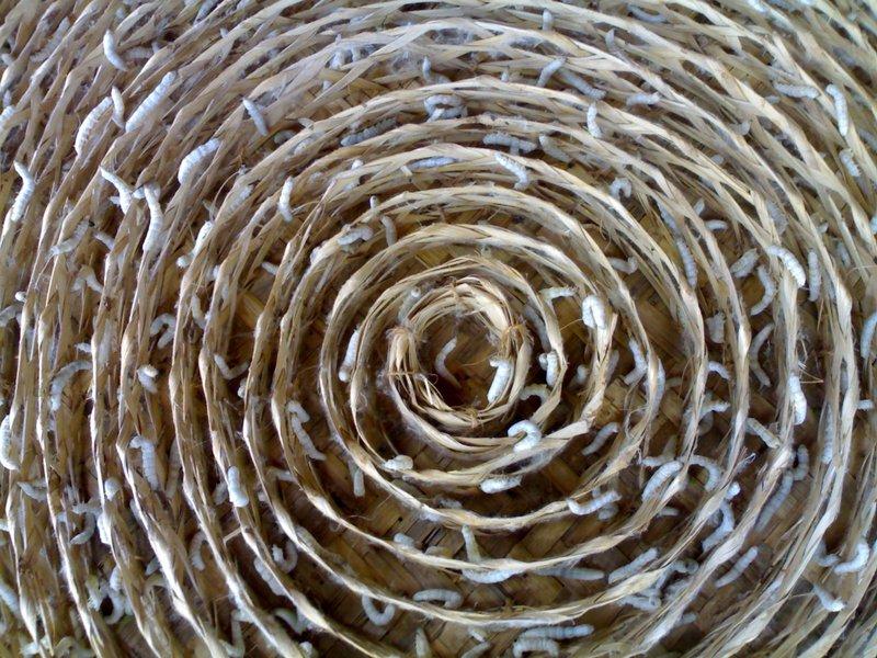 Silkworm rearing village