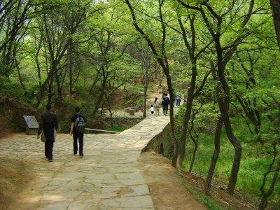 17 Path Damo1