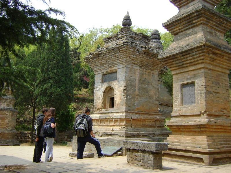 16 Pagoda Forest1