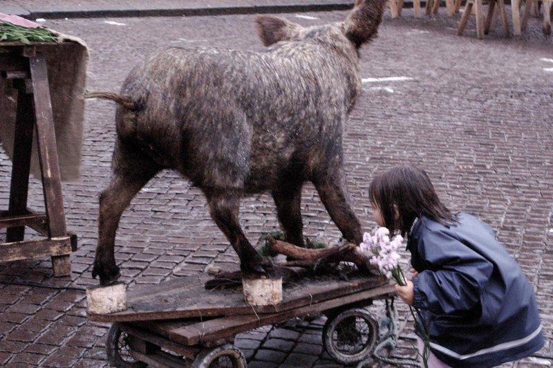 Boar hunting?