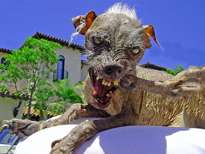 ugly_dog2.jpg