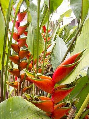 plants of Paraty