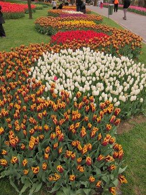 Tulips in Emirgan Park