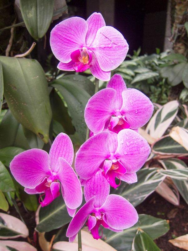Orchids in Rio de Janiero, Brazil