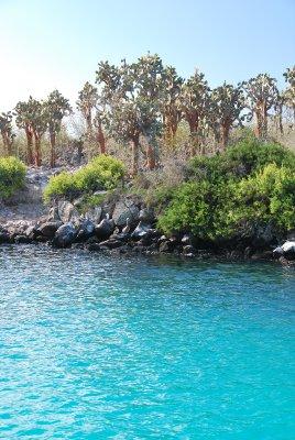 Blue_Ocean_and_cactus.jpg