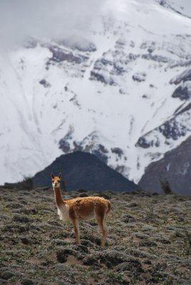 Ecuador- Andes 061