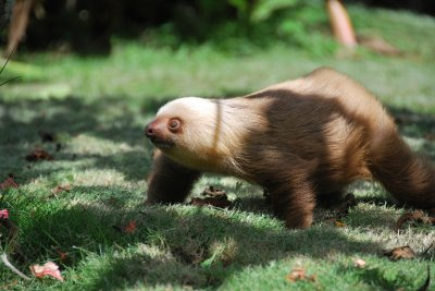 Sloth__2_.jpg
