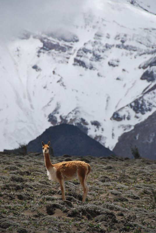Ecuador- Andes 061