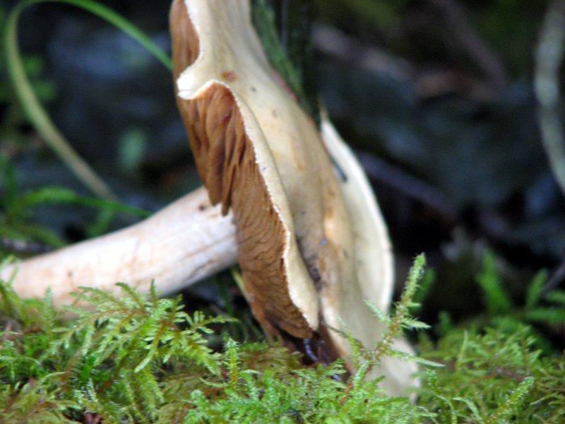 Mushroom Juneau Alaska
