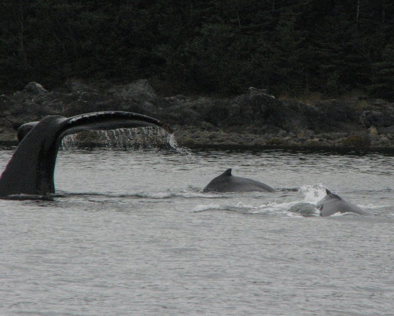 Whale Tails