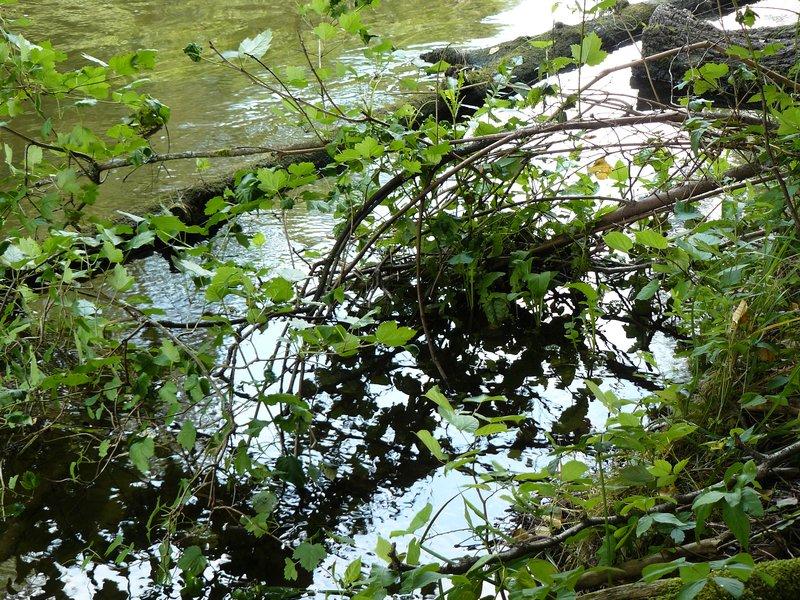 Wadag river near Olsztyn #2