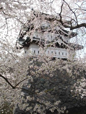 Castle through Cherry Blossom