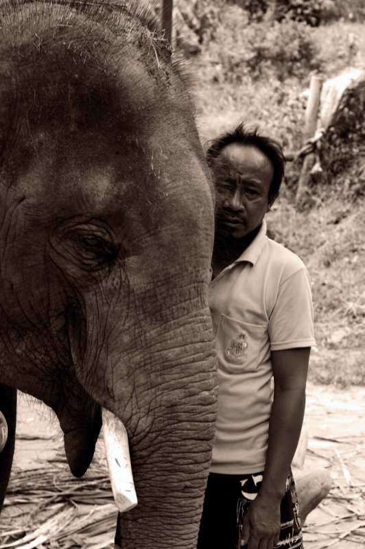 elephant ride_