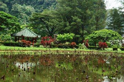ipho garden
