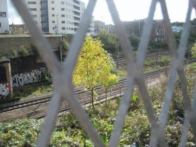 13_Tracks.jpg