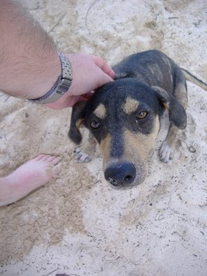 Petting a dog, Pigeon Point, Tobago